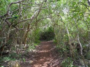 Blue Hole Park - Fußweg durch den Park