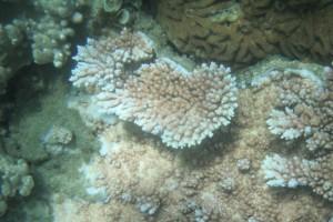 Schnocheln 1 - Reef am Vormittag