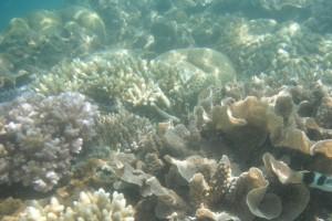 Schnocheln 2 - Reef am Nachmittag