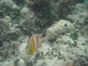 Green Island - Unterwasserwelt beim schnorcheln und Einwohner