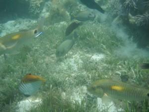 Green Island - Unterwasserwelt beim schnorcheln  / Ganz schön Verkehr hier, wo wollen die alle hin?