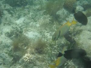 Green Island - Unterwasserwelt beim schnorcheln und noch ein paar Einwohner
