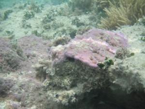 Green Island - Unterwasserwelt beim schnorcheln