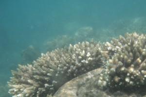 Schnorcheln am hoteleigenen Riff