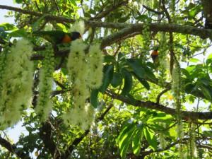 Cairns - Kleines Suchspiel: Wo sind die beiden Vögelchen?