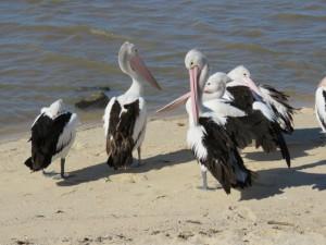 Cairns - Die Strandbewohner von Cairns
