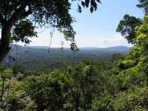 Red Peak - Aussicht auf den Regenwald