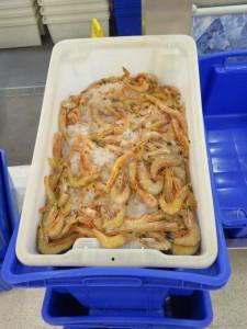 Im Supermarkt - Die Frischwaren 3