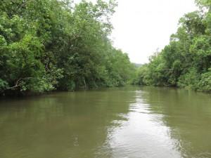 Bootsfahrt - Daintree River