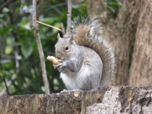 Die Bewohner des Hyde Park haben hunger