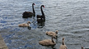Rotorua - Familienausflug auf dem Lake Rotorua