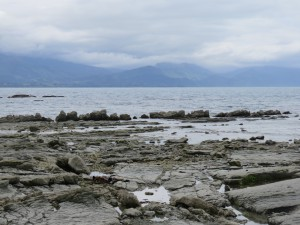 Kaikoura -Seehundfelsen
