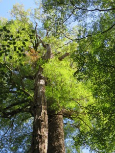 Ausflug nach Milford Sounds - Regenwald im Cascade Creek