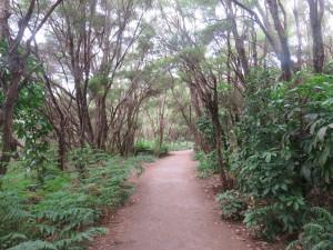 Rotorua - Wanderweg zu den Rotorua Thermal Quellen