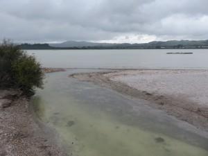 Rotorua - Wanderweg zu den Rotorua Thermal Quellen, Ausblick auf Lake Rotorua