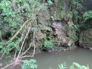 Fahrt von Rotorua nach Auckland - Besichtigung Waitomo Glowworm Caves, Park an der Grotto