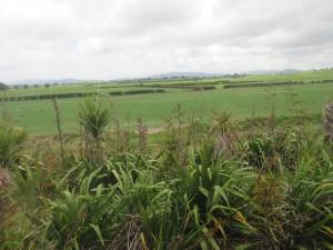 Fahrt von Rotorua nach Auckland - Unterwegs nach Auckland