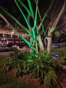 Cairns: Cairns by night