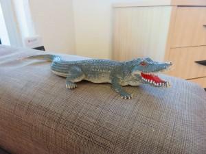 Cairns: Das freundlichste Krokodil in Cairns