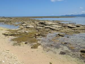 Ausflug nach Frankland Islands: Die Insel
