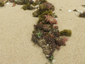 Inselausflug Low Isles: Auf der Insel