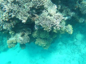 Great Barrier Reef: Schnorcheltour im Riff