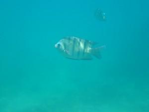 Ausflug nach Frankland Islands: Schnorcheln im Reef vor Frankland Islands